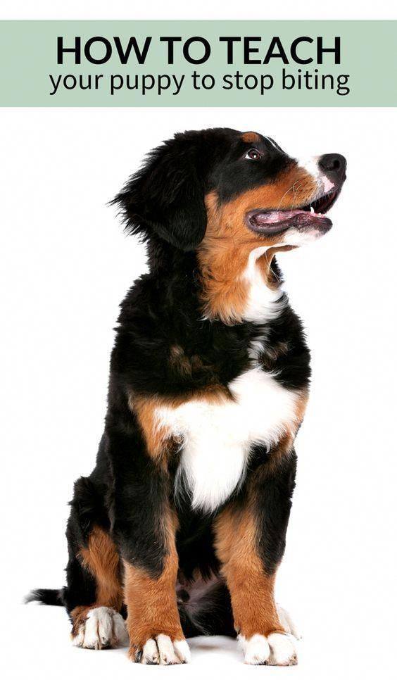 3 Simple Ways To Stop Your Puppy From Biting With Images Puppy Training Biting Puppy Training Dog Training Obedience