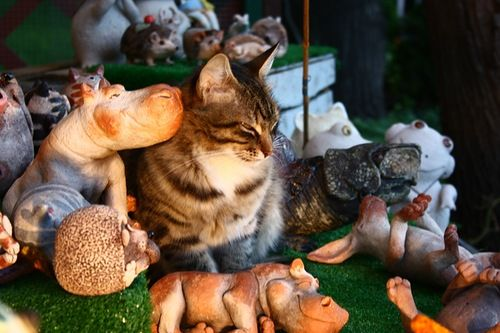 um, a cat amongst hippos?! yes yes yes!