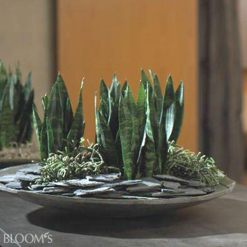 bildergalerie bloom 39 s deko ideen mit blumen und pflanzen plant pinterest felsen. Black Bedroom Furniture Sets. Home Design Ideas