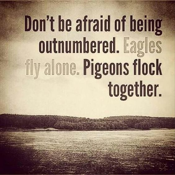 Dont be afraid of being outnumbered. Eagles fly alone. Pigeons flock together. Quotes Of The Day - 10 Pics