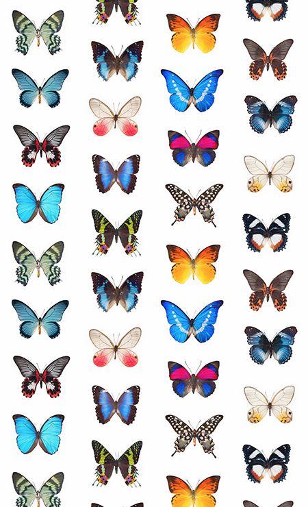 papier peint papillon curious collections design et. Black Bedroom Furniture Sets. Home Design Ideas