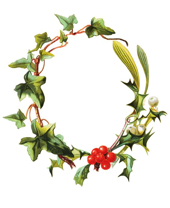 holy-mistletoe-and-ivy.png (579×709)