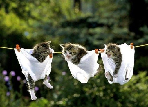 Ten Fun Pictures Of Three Cats Together Hanging Out For The Laughs