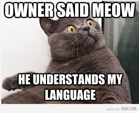 Owner said meow!