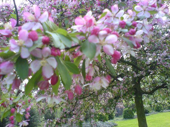 25.02.2015 - Flowers1 and Marigolds etc... http://dali48.blogspot.com/2012/03/25022015-flowers1-and-marigolds-etc.html?spref=tw … see dali48 on Google,FB,Blogspot,Bod.de,StumbleUpon,Pinterest,Twitter...: