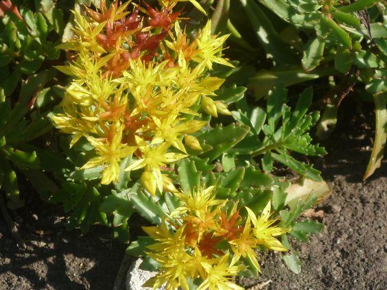 Schöne Blumen