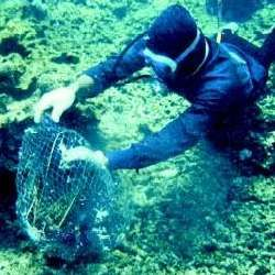 How to become a marine biologist?