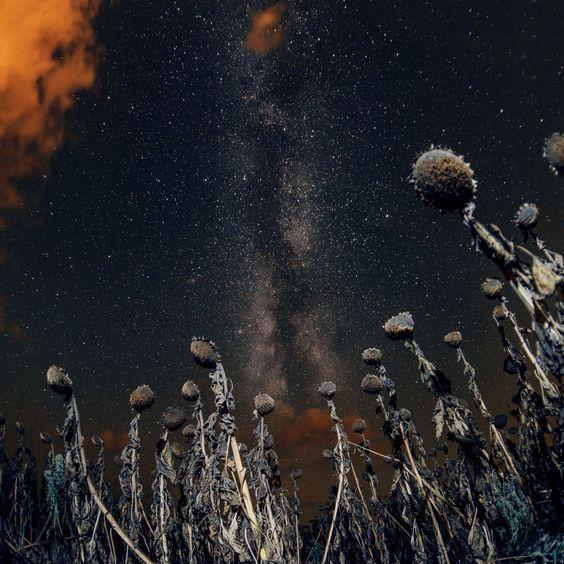 when sun is down by Pavlo Parubochyi on 500px
