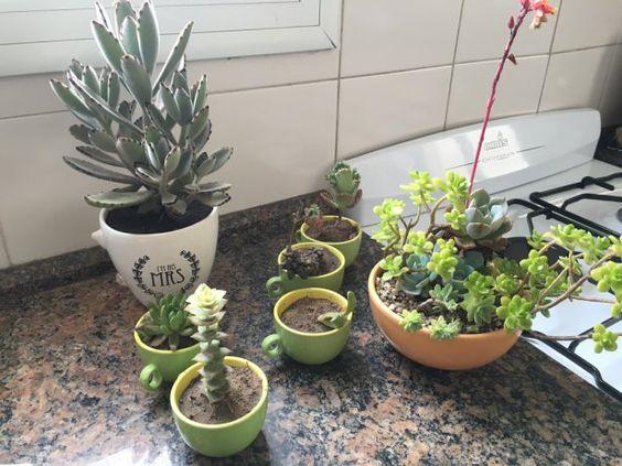 Por Koty. Hola! Hoy venía a compartirles mi primer post en este blog sobre que hacer con todas esas tazas que ya no usamos, están cachadas, rotas o simplemente queremos convertir en macetas y que e...