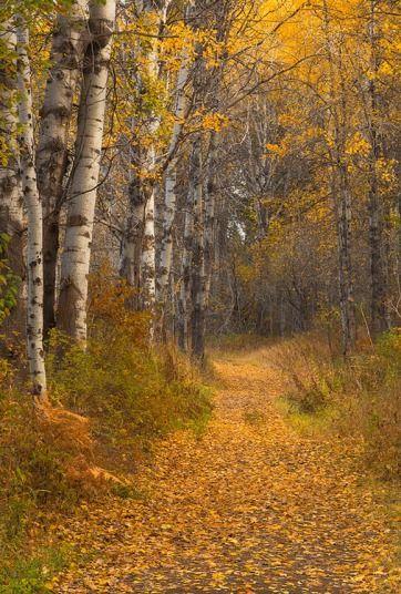 Autumn woodland walk