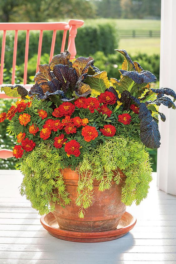Fall Container Gardening Ideas: Stunning Marigold Fall Container: