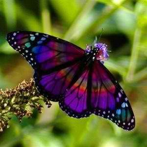 paint box  butterfly                             .from Whispers on the Wind