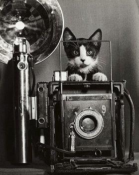 cat & camera: Camera Cat, Vintage Cameras, Photographer Cat, Cat Photographer, Vintage Photo, Vintage Cat