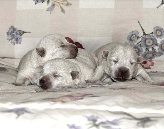 One of these lucky puppies is going to be Oliver!: Lucky Puppies, Going, Puppys