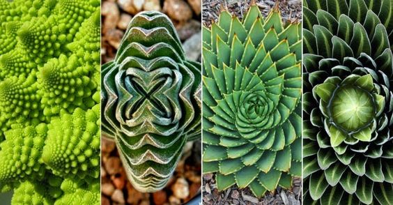 Succulent Geometry