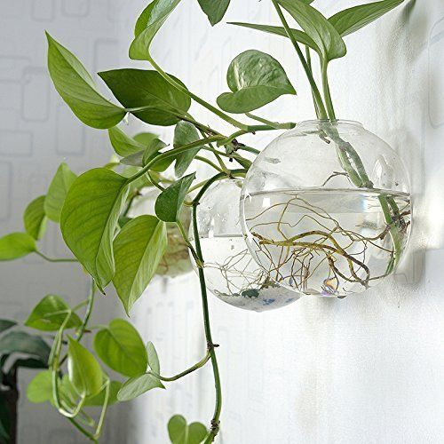 Pack Of 6 Glass Planters Wall Hanging Planters Round Glass Plant