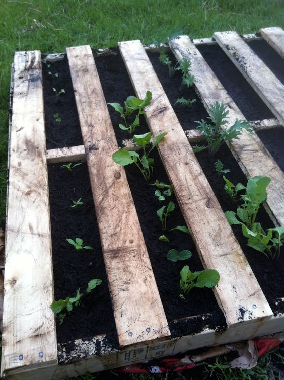 Raised beds are a necessity for me b/c I have terrible soil!  excited to try this!