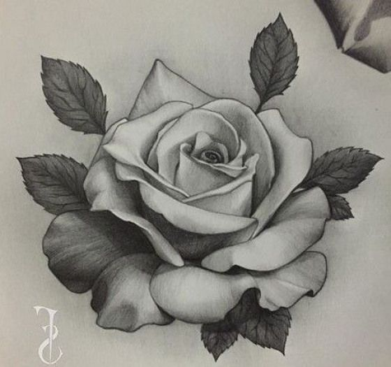 Designs Rose Rose Sketch Rose Flower Tattoos Roses Drawing Rose Drawing Tattoo