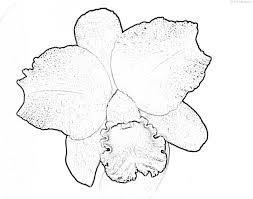 orquideas para colorear , Buscar con Google