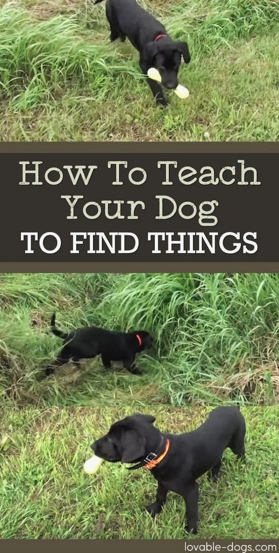 Basic Obedience Training For Dogs Help Is Here Dog Training