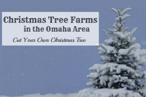 7 Delightful Christmas Tree Farms Near Omaha Family Fun In Omaha Christmas Tree Farm Tree Farms Visit Omaha