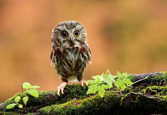 Baby owl! How cute!