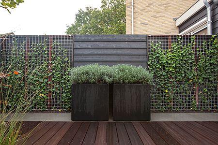 Kleine patio tuin met mooie erfafscheiding waarbij de hederahaag wordt onderbroken door gepotdekselde schutting met daarvoor grote zwarte bloembakken. Kleine tuin | Heart for Gardens.