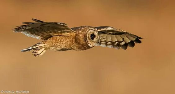 Facebook/owl pages