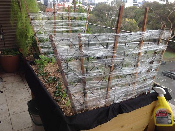 Diy windbreak for plants gardening pinterest plants for Garden windbreak designs