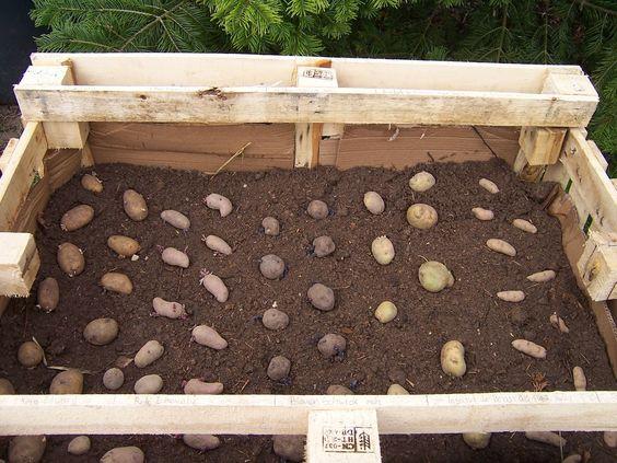Pin Auf Home Gardening