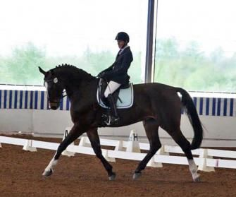 Richelieu - Elegant 3rd level Oldenburg gelding by Regazzoni. High Point Winner at first show at 3rd with scores to 68%! Wonderful gaits and potential to move up the levels and do more advanced work. Judges love this horse! Bred, ridden and shown by Adult Amateur owner. $42,000