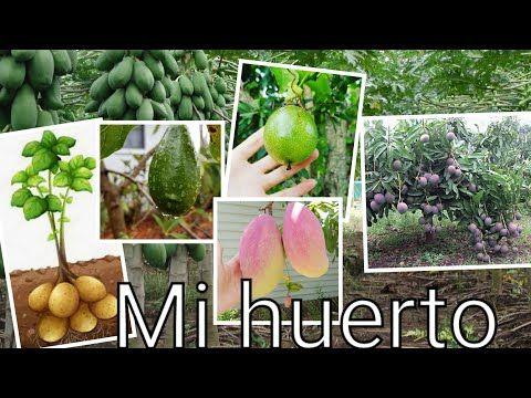 Plantas De Frutas