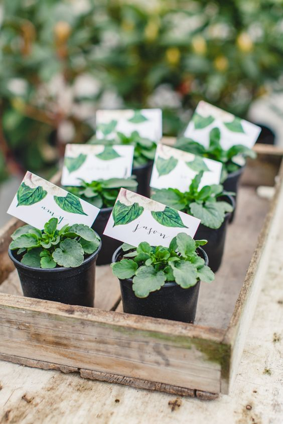 sweet little plants, favors | herb wedding favors