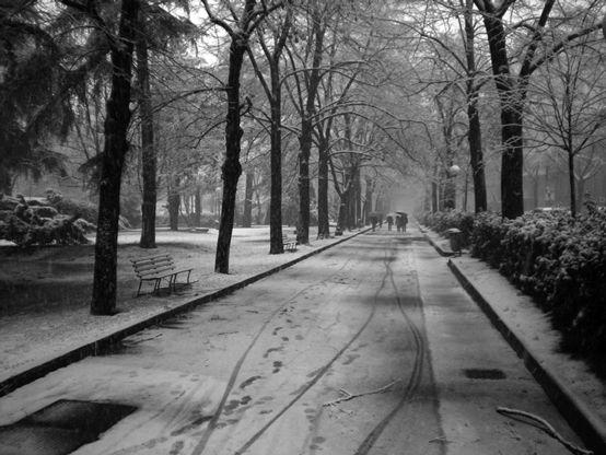In the park along Viale Muratori