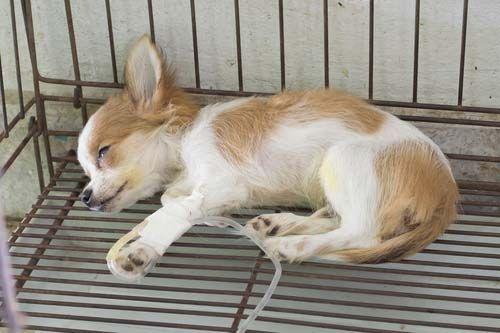 11 Most Fatal Dog Health Conditions Dog Allergies Dog Health Dog Illnesses