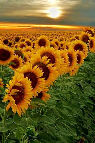 Have hidden myself in a field of sun flowers reading a book with the happiest of endings