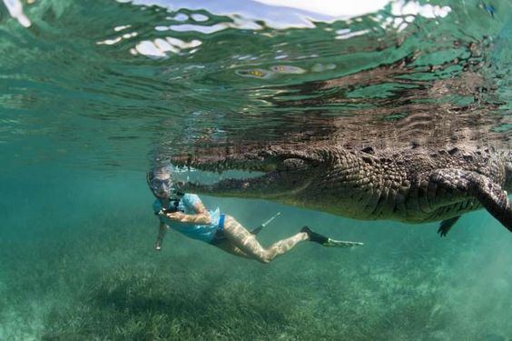 Incredible photos show the moment a wildlife photographer took his daughter swimming with crocodiles in Cuba.