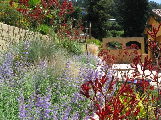 colorful dry garden