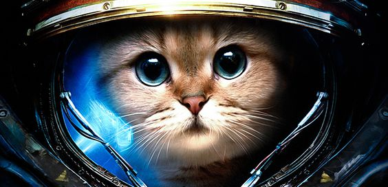 gatto spaziale - Cerca con Google
