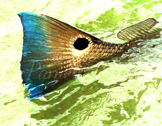 Redfish art red drum on canvas spottail bass painting for Bass fishing art