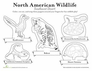 Worksheets North American Biomes Worksheet animals science and finger puppets on pinterest american desert animal biomes worksheets1
