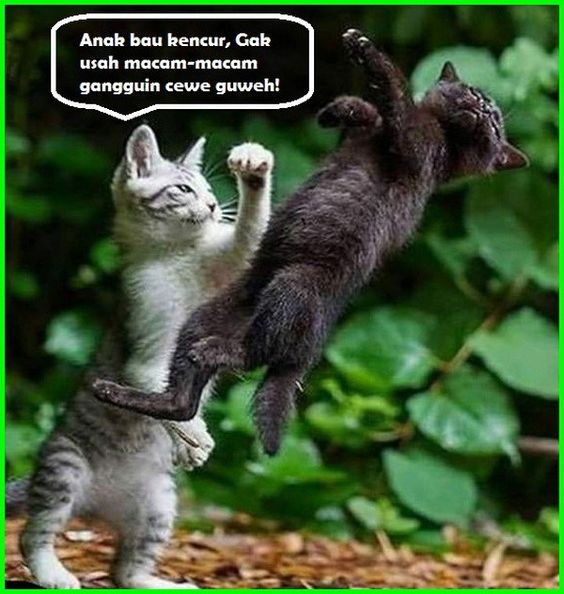 Gambar Kucing Lucu Imut Dan Paling Menggemaskan Sedunia Gambar