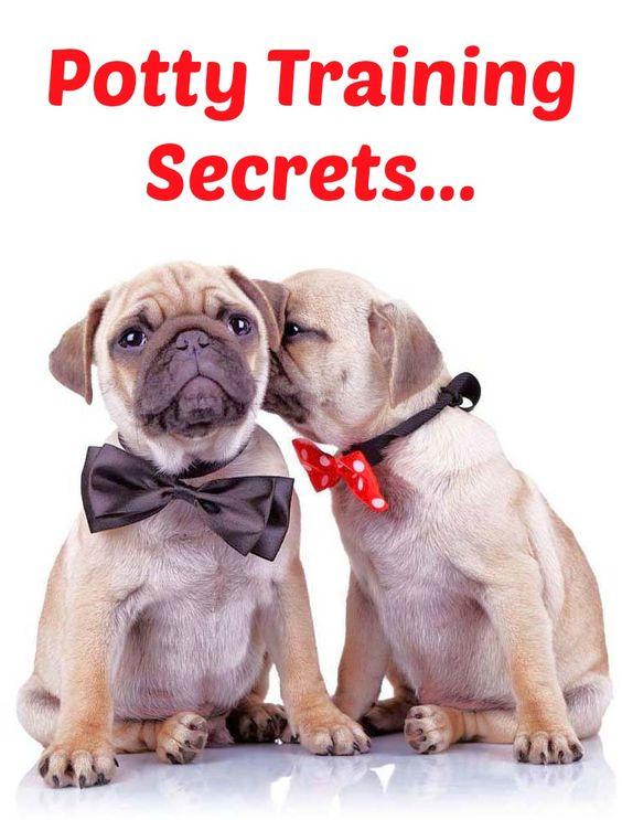 Tips Control - The Dog Training Secret