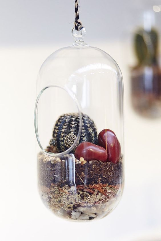 crazy black cactus in an oval shaped terrarium by FLO Atelier Botânico #terrarium #botanicalshop