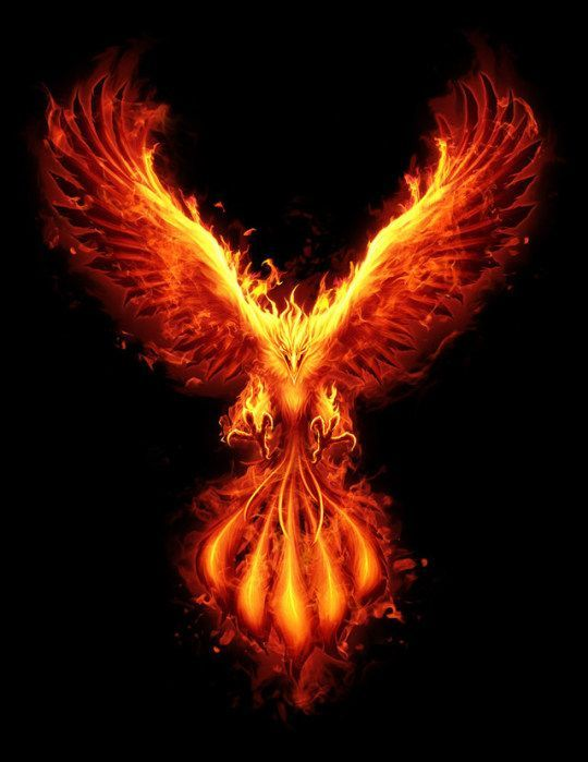 Pin By Allix Muchler On Tatuajes In 2020 Phoenix Artwork Phoenix Bird Art Phoenix Wallpaper