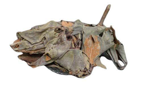 [+] Aconitum Heterophyllum