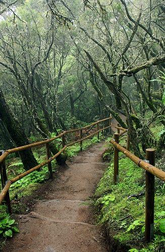 Escursione nella foresta subtropicale del Parco   Nazionale GarajonayLa #Gomera
