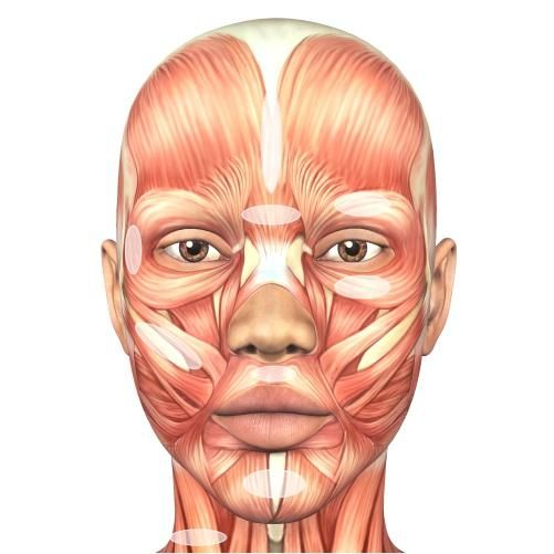 Facial Muscle Chart In 2020 Human Face Face Muscles Anatomy Face Anatomy