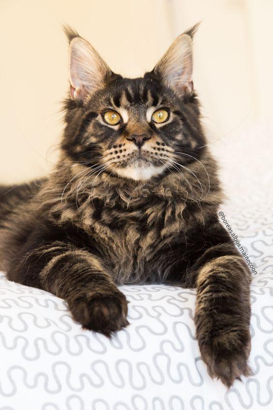 Pin On Fat Cat