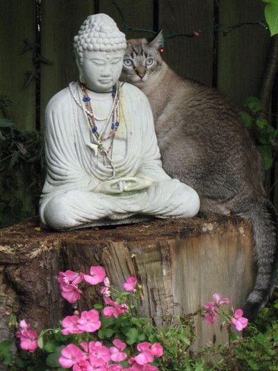 Budismo, Budas Deco, Gatos Budistas, Gatos Google, Puissent Tous, Jardines Cautivadores, Ellos, Buda Esculturas, Hermosa